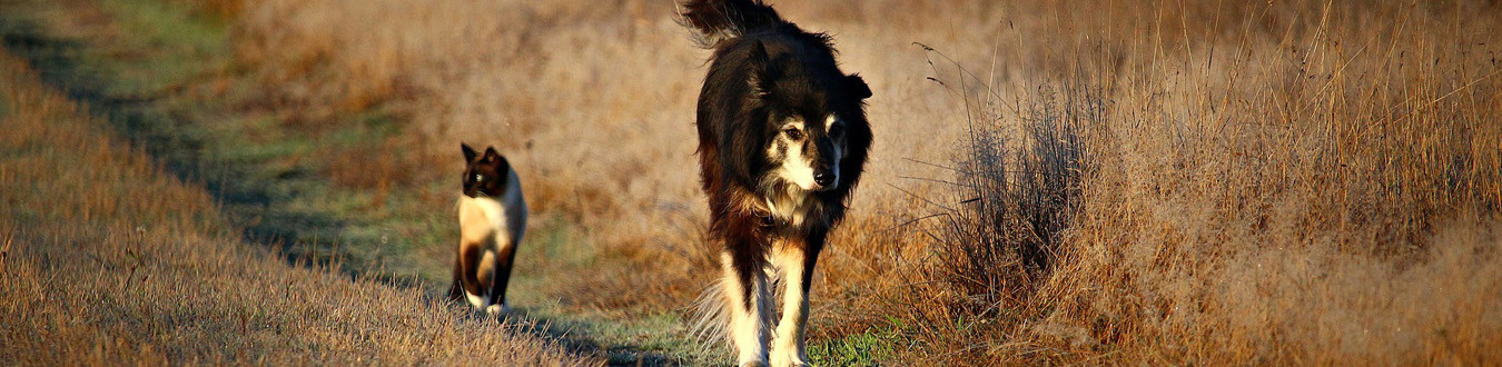 savons pour les animaux (chiens, chats, chevaux)